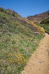 Wildflowers grow beside a footpath rising through a valley Island of Sark, Channel Islands, Great Britain