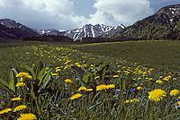 Europe/France/Auverne/63/Puy-de-Dôme/Parc Naturel Régional des Volcans: Le Puy de Sancy (1885 mètres)