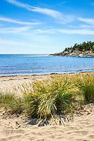 Grästuvor på en sandstrand och badplats vid havet på Nåttarös östra sida i Stockholms södra skärgård.