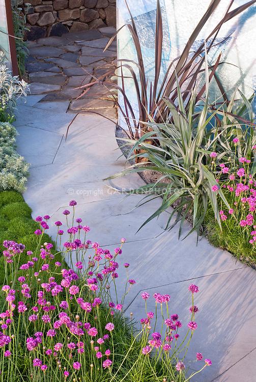 Armeria planted near house garden pathway walk, wall into patio garden
