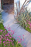 Armeria planted near house garden pathway walk, wall into patio garden