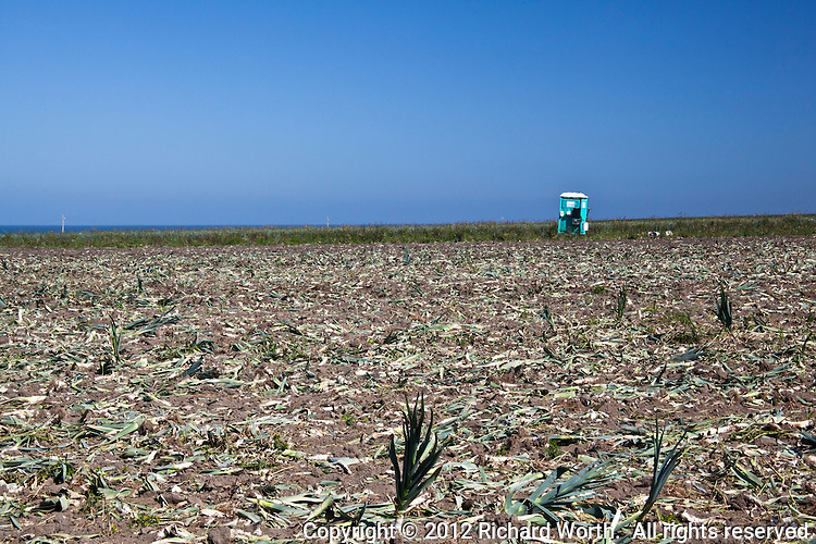 Scattered crop remants litter a field on California's coast where a portable toilet remains as a reminder of the human element in harvesting.