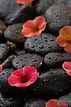 Fresh flowers arranged on wet spa rocks