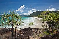 View through pandanus palms to Noah Beach.  Daintree National Park, Queensland, Australia