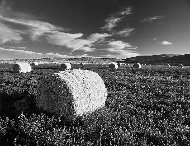 F00126M.tiff  Alfalfa bales. Note second growth beneath bales. Malhuer County. Near Jorden Valley, Oregon