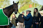 LOUISVILLE, KY - MAY 1: Bolt d'Oro, trained by Mick Ruis, exercises in preparation for the Kentucky Derby at Churchill Downs on May 1, 2018 in Louisville, Kentucky. (Photo by Eric Patterson/Eclipse Sportswire/Getty Images)