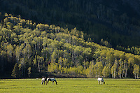 Horses in a pasture in Grand Tetons National Park
