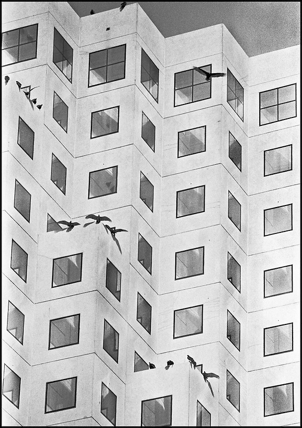 Vultures on a County court building.<br /> From &quot;Miami in Black and White&quot; series<br /> Downtown Miami, FL
