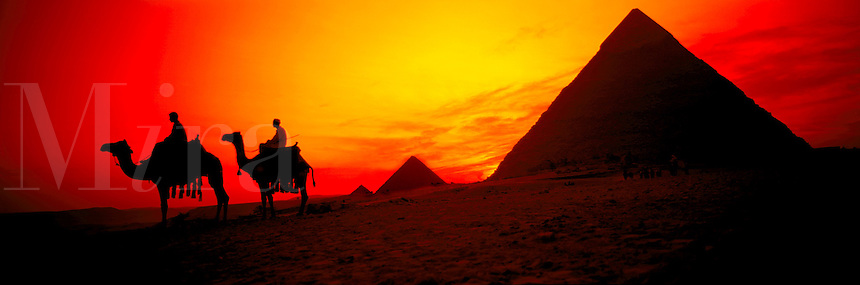 Camels at the Great Pyramids of Giza, Egypt