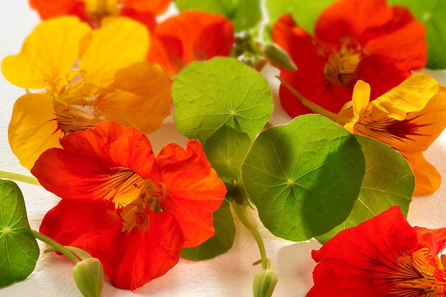 Fresh nasturtium flowers & leaves