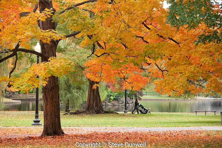 Maple leaves, Public Garden, Boston, MA