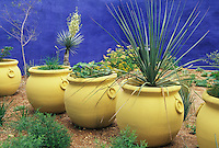Large pots painted pale yellow are part of the color scheme in the Moroccan garden Marjorelle, which was the inspiration for Mike Shoup when he created  his  own blue walled compund at his  Antique Rose Emporium nursery in San Antonio, Texas