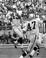 Oakland Raiders David Grayson intercepts pass along with teamate Kent McCloughan. (photo by Ron Riesterer)