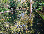 View of the pond behind Cézanne's house at the Jas de Bouffan in Aix-en-Provence