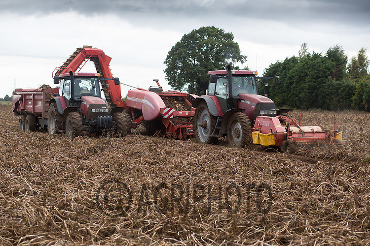 Harvesting potatoes in the Lincolnshire Fens<br /> Picture Tim Scrivener 07850 303986<br /> &hellip;.covering agriculture in the UK&hellip;.