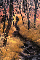 Infrared landscape of pixie forest on Blue Ridge Parkway in North Carolina with trail leading through woods