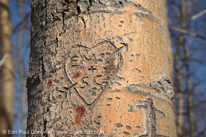 Initials carved into tree in a New England, USA forest