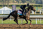 ARCADIA, CA  OCTOBER 31. Breeders' Cup Juvenile Turf entrant Arizona, trained by Aidan P. O'Brien,  exercises in preparation for the Breeders' Cup World Championships at Santa Anita Park in Arcadia, California on October 31, 2019.  (Photo by Casey Phillips/Eclipse Sportswire/CSM)