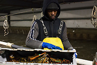 Comfort Mainza, 22, weighs crates of sorted live lobsters at Island Seafood's receiving facility before sending them to the packing facility in Eliot, Maine, USA, on Wed., Jan. 31, 2018. Lobsters are sorted into similar sizes and then moved to a packing facility to be shipped to customers around the world.