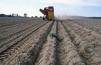 GERMANY potato harvest with harvesting machine / DEUTSCHLAND Kartoffel Ernte mit Traktor und Grimme Roder in Mecklenburg-Vorpommern