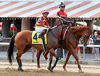 Mia Mischief in the post parade as Dream Tree (no. 8) wins the Prioress Stakes (Grade 2), Sep. 2, 2018 at the Saratoga Race Course, Saratoga Springs, NY.  Ridden by Mike Smith, and trained by Bob Baffert, Dream Tree finished 4 1/4 lengths in front of Mia Mischief (No. 4).  (Bruce Dudek/Eclipse Sportswire)