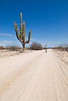 Adult female taking picture of large Cordon cactus, Baja California, Mexico