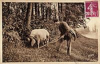 Europe/France/Midi-Pyrénées/46/Lot/Vallée du Lot/Cahors: Vieille carte postale sur le thème de la truffe - Collection Mr Pebeyre - Recherche de la truffe au cochon truffier