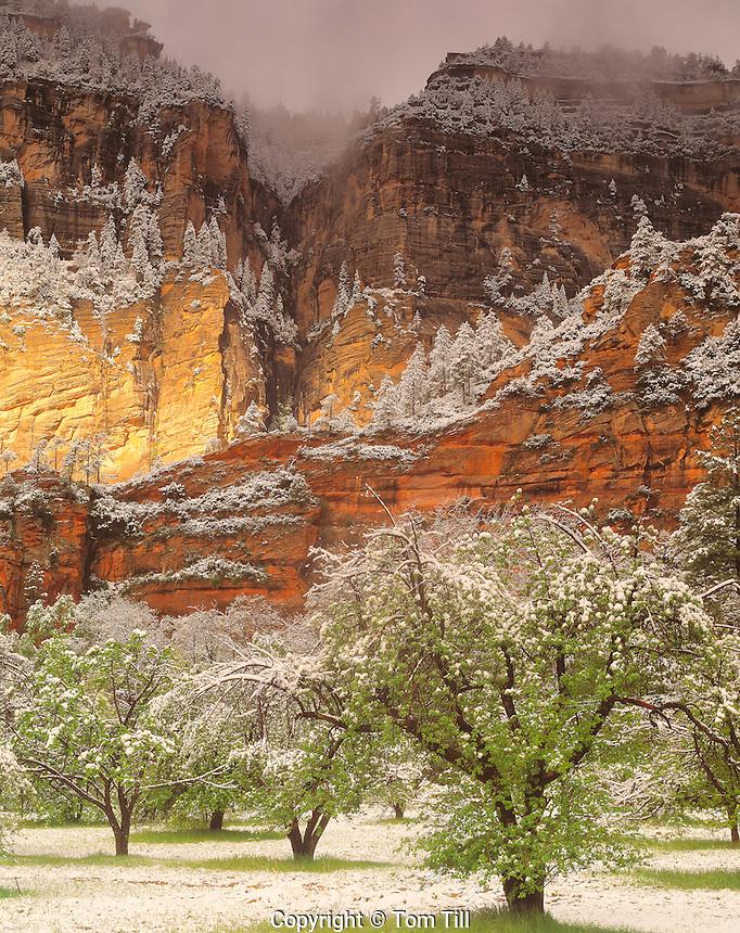 Spring Snow at Oak Creek, Coconino National Forest, Arizona    Oak Creek Canyon Recreation Area