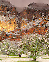 Spring Snow at Oak Creek, Coconino National Forest, Arizona    Oak Creek Canyon Recreation Area