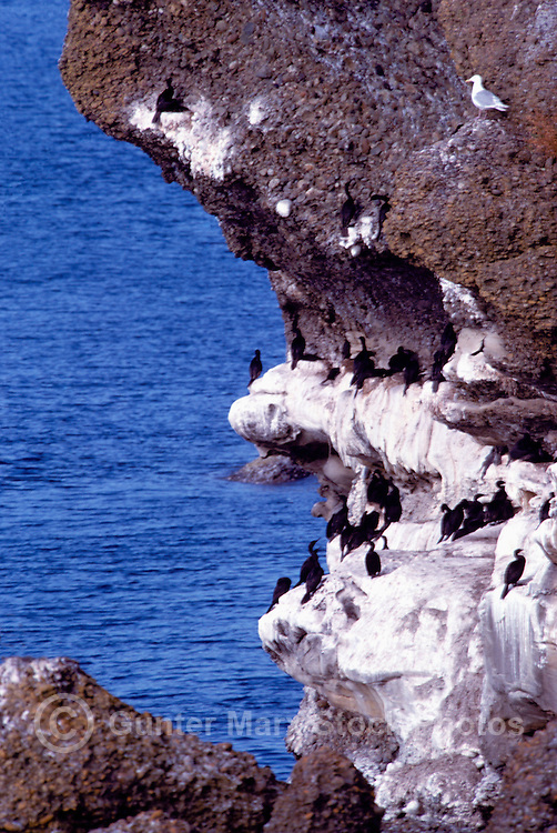 Hornby Island, BC, British Columbia, Canada - Cormorants Nesting Area on Bluffs at Helliwell Provincial Park