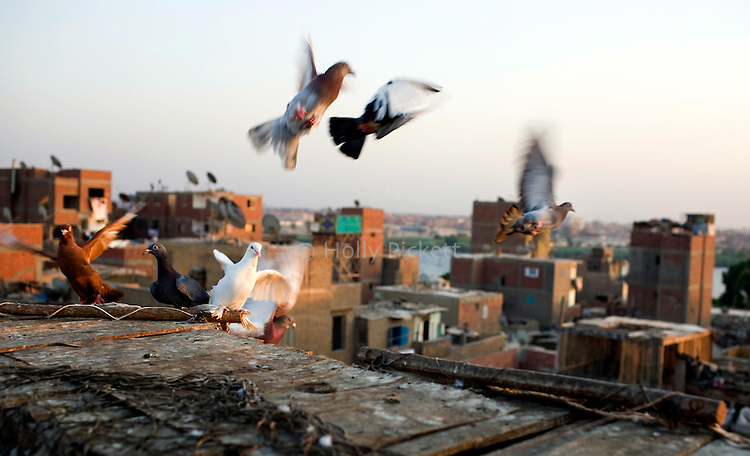 Saber Saad's pigeons flee from a visitor in Tora neighborhood, Cairo, Egypt, Aug. 5, 2009. Now that he's retired, Saber Saad spends most of his time with his 20 pairs of pigeons that he keeps in his rooftop aviaryHe has been training pigeons for 25 years and finds it relaxing. Like most people in the neighborhood, Saad's family has been living in the same house for generations.