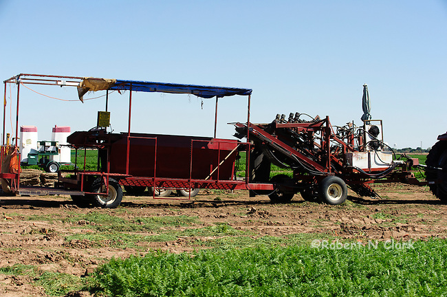 Tractor and carrot harvestor equipemnt in the field