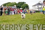 Terrier Racing at the Fenit Seabreeze Festival on Sunday.
