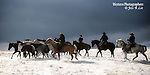A group of cowboy and cowgirls pushing horses through the snow .