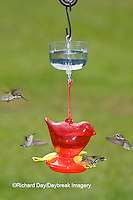 01162-12510 Ruby-throated Hummingbirds (Archilochus colubris) at feeder with ant guard,  Marion Co.  IL