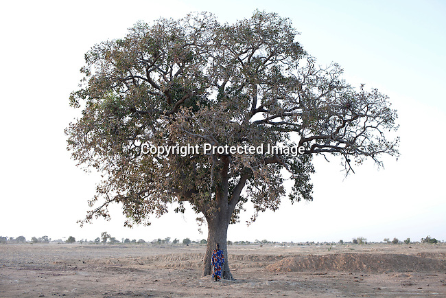 TANGAKA, MALI - FEBRUARY 24: Mori Fofana, a farmer stands unders a tree where his land that was taken from him, when a channel was built by Chinese for Libyan company that leases land from the Mali government on February 24 2011, outside Tangaka, Mali. Photo by Per-Anders Pettersson