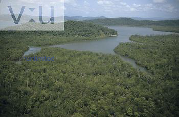 Aerial view of a Mangrove forest, Central America.