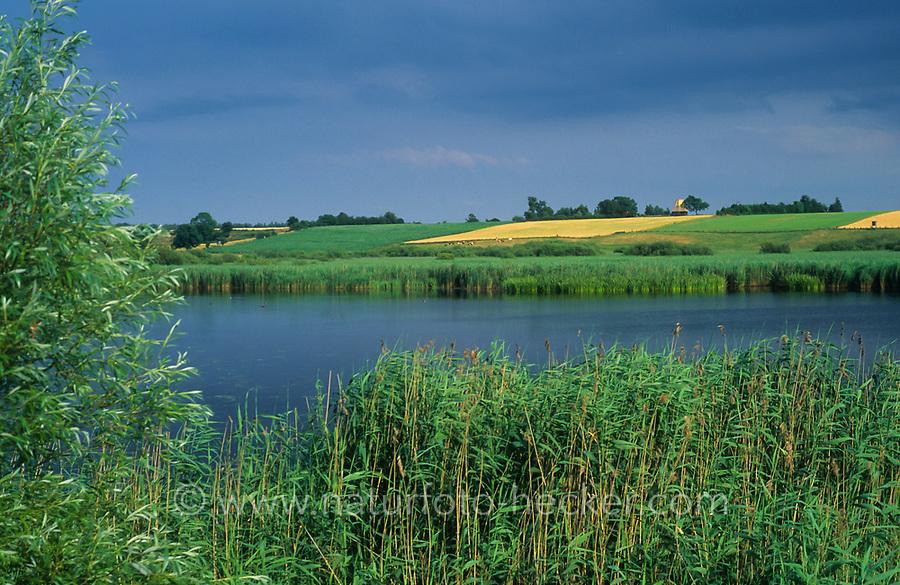 Lebrader Teich, Naturschutzgebiet Vogelfreistätte Lebrader Teich, Schleswig-Holstein, Deutschland