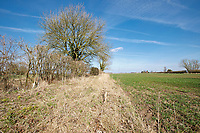 Field margin & winter cut hedgerow in spring - Lincolnshire, March
