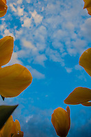 Sky with Yellow