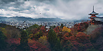Beautiful atmospheric panoramic view of Kyoto colorful red autumn scenery view from Kiyomizu-dera, Sanjunoto pagoda and Kyoto tower in the city skyline with eagles flying in stormy skies. Higashiyama, Kyoto, Japan 2017.