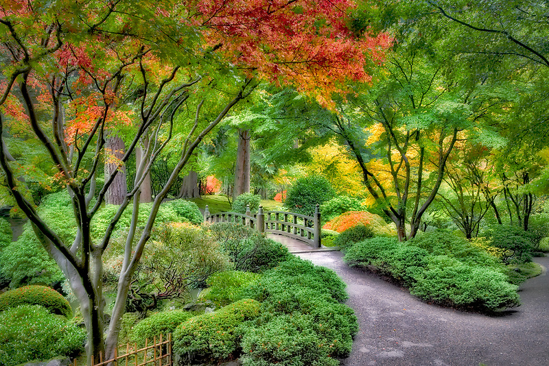 Fall color bridge and path at Japanese Gardens. Portland. Oregon