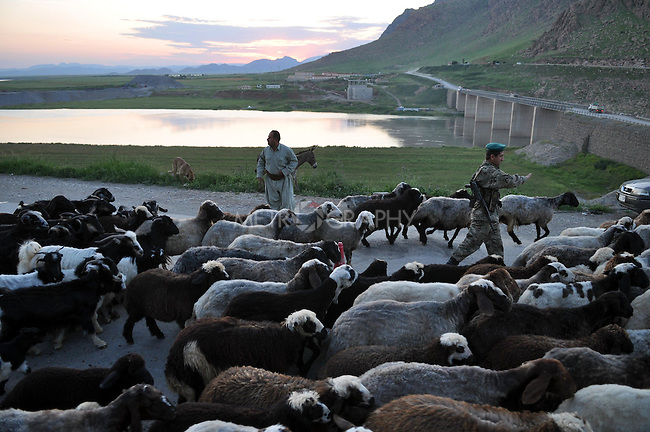 RANYA, IRAQ: A shepherd herds his sheep back to the village at the end of the day. A place where tradition overrides the rule of law.