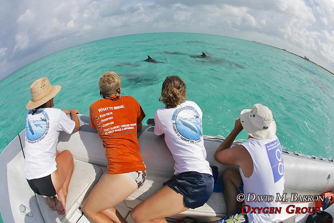 EW Team & Bottlenosed Dolphin