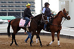 April 28, 2019 : Liora works out at Churchill Downs, Louisville, Kentucky, preparing for a start in the Kentucky Oaks. Owner Coffeepot Stables, trainer Wayne M. Catalano. By Candy Ride x Giant Mover (Giant's Causeway)  Mary M. Meek/ESW/CSM