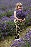 A portrait of a little girl with her arms full of bunches of freshly cut lavender