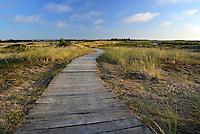 Boardwalk across the dunes at Holme Nature Reserve, Norfolk