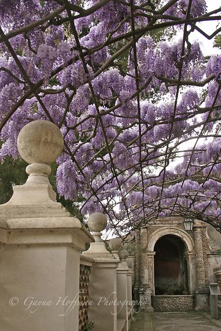 Wisteria arbor at Tivoli Gardens, Italy