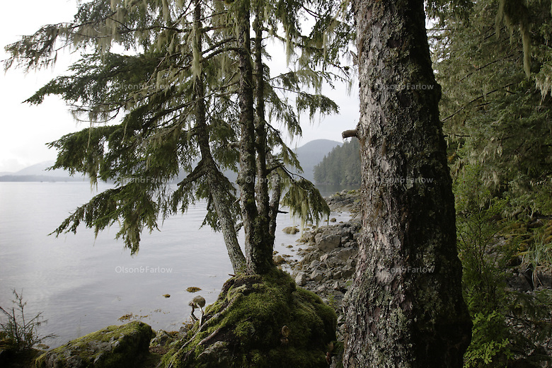 Trees grow near the water in Sitka Sound.