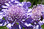 A beautiful purple and blue flower